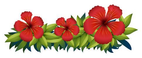 Rode hibiscus in groene struik vector