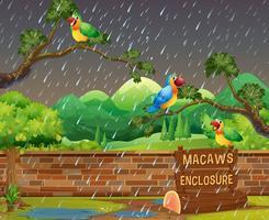 gelukkige macaws in de dierentuin in de nacht