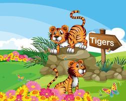 Twee tijgers naast een uithangbord