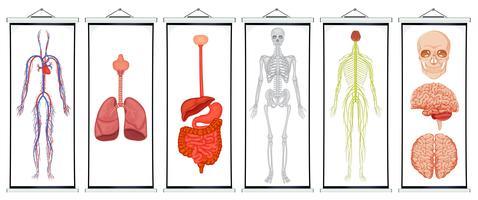 Diagrammen van menselijke systemen vector