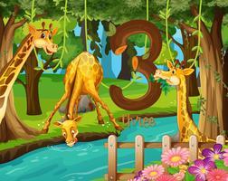 Drie giraffen naast het water