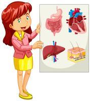 Vrouw die grafiek van organen voorstelt vector