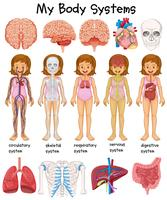 Menselijk lichaamssystemen diagram vector