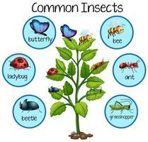 Gemeenschappelijk insect op plant vector