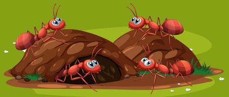 Een groep werkende mieren