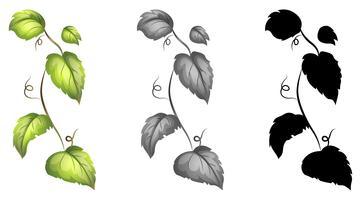 Verzameling van geïsoleerde wijnstokken vector