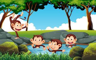 Mokey speelt in water