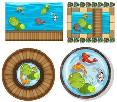 Verschillend ontwerp van pool met vissen