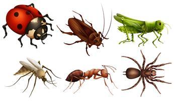 Verschillende insecten vector
