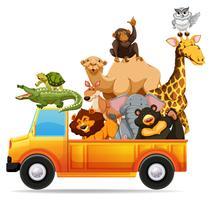 Wilde dieren op pick-up truck vector