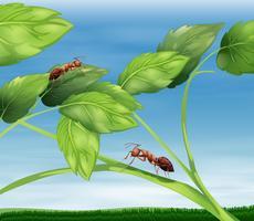 mieren vector