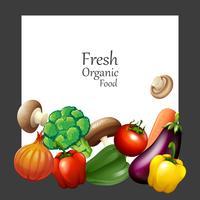 Verse groenten en banner vector