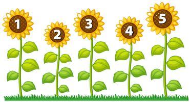 Nummer één tot vijf op zonnebloemen
