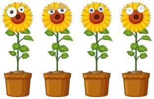 Zonnebloemen met verschillende emoties