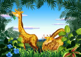 Giraffe in de natuur