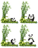 Panda en bamboe vector