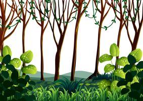 Bosscène met groene bomen vector