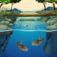 Vissen die in de rivier zwemmen vector