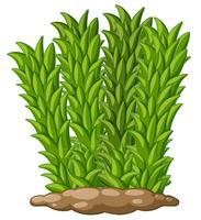 Hoog gras op de grond