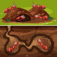 Vuur mieren in het nest