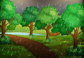Bosscène op regenachtige dag