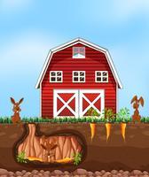 Konijnen graven grond op de boerderij
