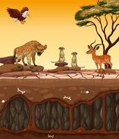 Een droog land en wilde dieren