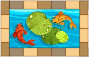 Twee vissen die in klein zwembad zwemmen