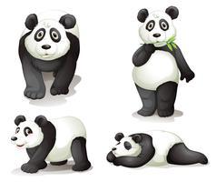een panda vector
