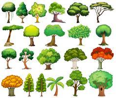 Aantal bomen