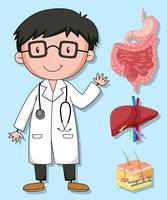 Artsen en menselijke organen