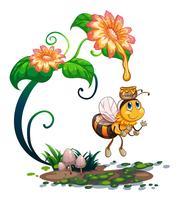 Bij die honing van de bloem verzamelt vector