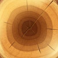Houten dwarsdoorsnedebehang als achtergrond vector