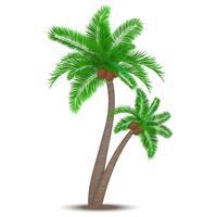 Tropische palmboom met kokosnoten vector