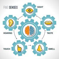 Vijf zintuigen concept