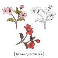 Bloeiende boom. Stel de verzameling in. Hand getrokken botanische bloesemtakken op witte achtergrond. Vector illustratie