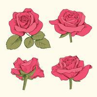 Vastgestelde inzameling van rode rozen met bladeren die op witte achtergrond worden geïsoleerd. Vector illustratie