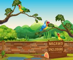 gelukkige ara's in een dierentuin vector