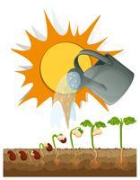 Verschillende stadia van een groeiende plant vector