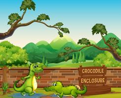 Twee krokodillen in de dierentuin vector
