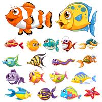 Verschillende soorten vis vector