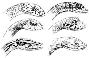 Schets van slangen vector
