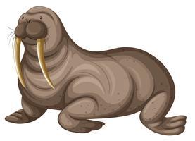 Walrus met scherpe tanden vector