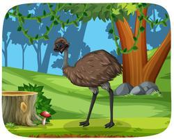 Een emoe in het bos