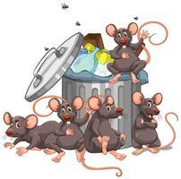 Vijf ratten die bij de vuilnisbak zitten