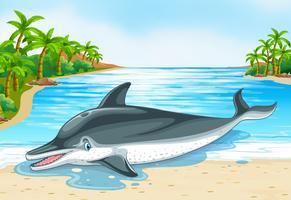 Dolfijn liggend op de wal vector