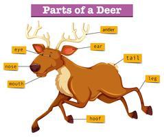 Diagram met delen van herten