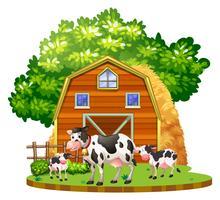 Koeien leven op het erf vector