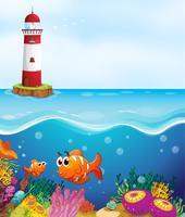 vissen en koraal in zee