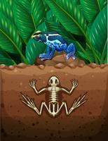 Kikker op de grond en fosil ondergronds